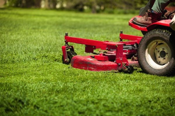 biggest lawn care mistake