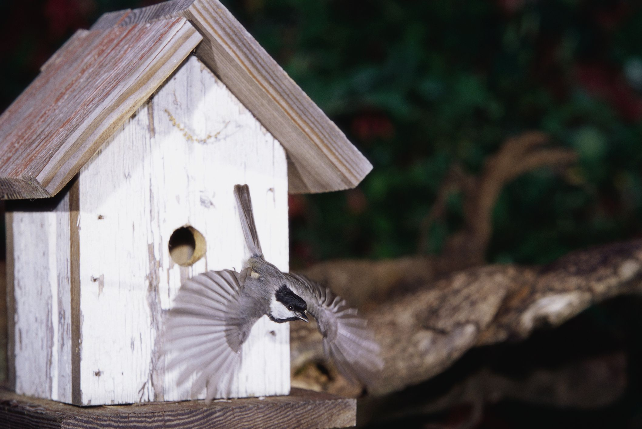 The Best Times to Put Up Bird Houses