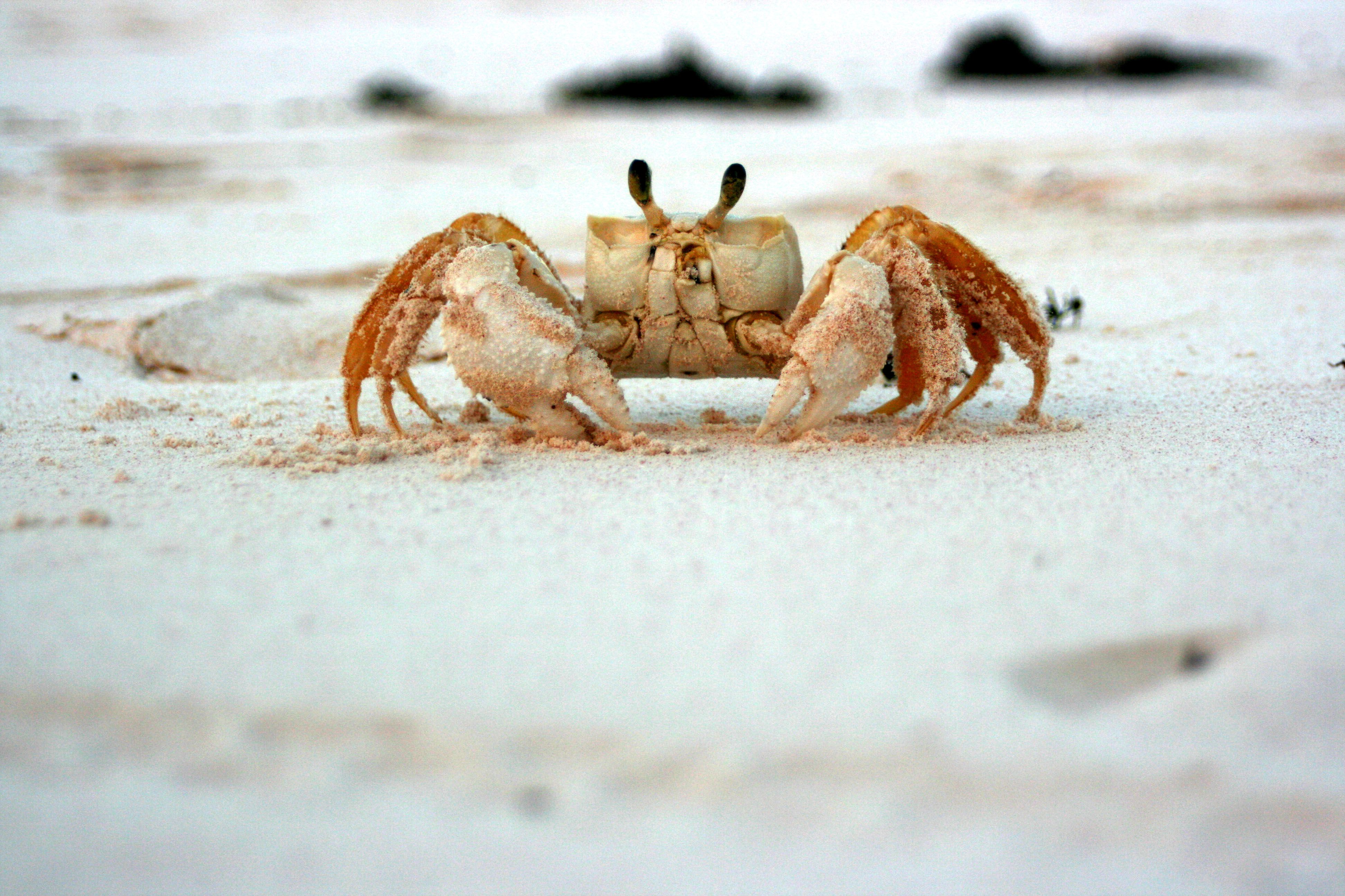 Crab Wordsearch Vocabulary Crossword And More