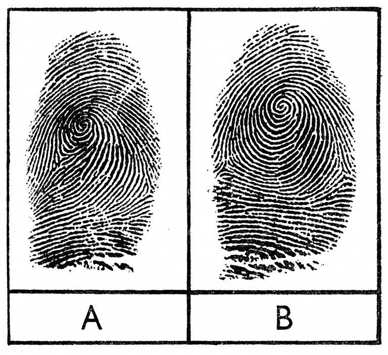 Identical Twins and Fingerprints