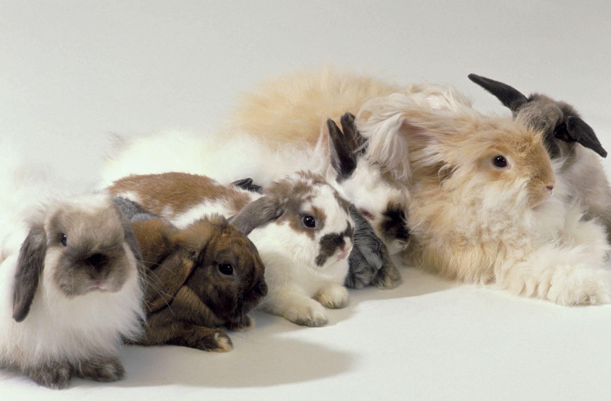 Garden Rabbits Decor