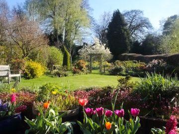 Top 6 Spring Blooming Bulbs