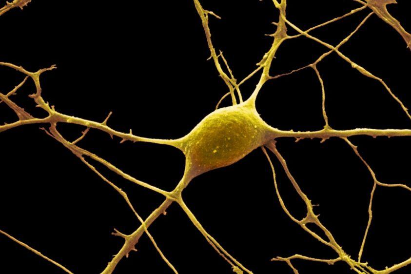 The Anatomy of Neurons: Human Biology