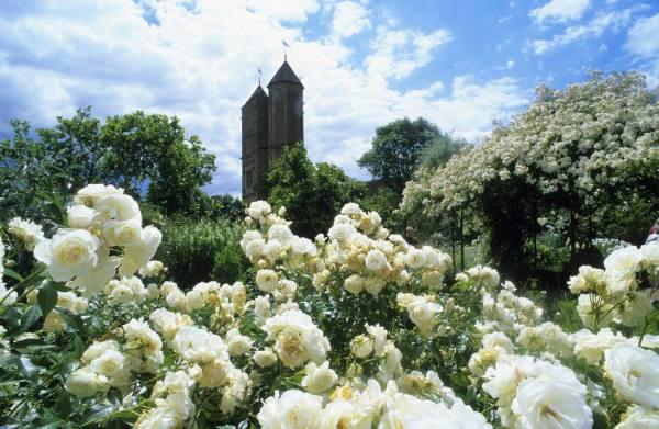 designing white flower garden