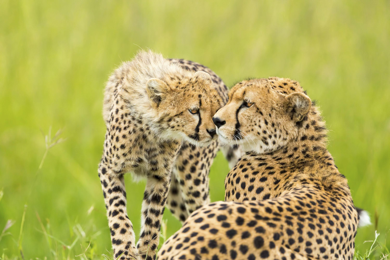 Endangered Species Lesson Plans
