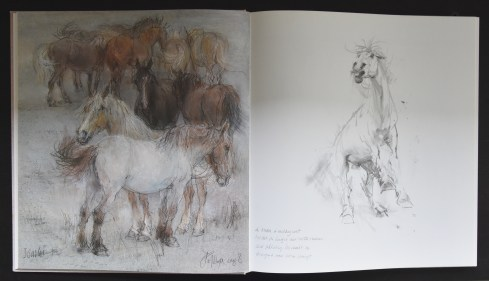 Klaasse paarden b