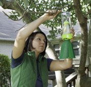 Eco-friendly Tips to Protect Homes From Pesky Bugs