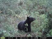 Derrie's Bear II