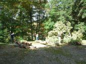 Cutting Wood!