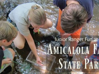 Check out the Junior Ranger Programs at Amicalola Falls State Park