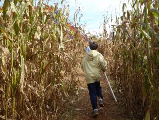The Rock Ranch Corn Maze via @FieldTripswSue