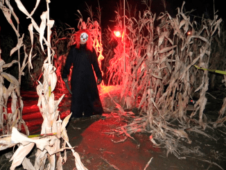Haunted Corn Mazes near Atlanta via @FieldTripswSue
