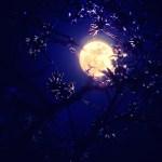 2015年4月4日『皆既月食』お花見と月食を綺麗に残そう!撮影方法も紹介