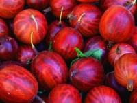 Beeren - Stachelbeeren