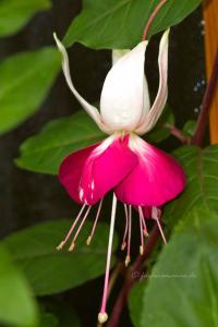 Fuchsia Satellite
