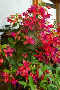 Fuchsia Pink Fantasia