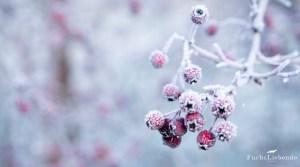 11 Dinge, die man zur Winterzeit machen sollte