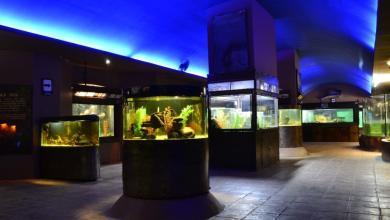 El Zoo de Morelia, Museo Viviente de México