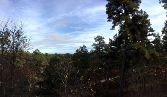 Hiking the batona trail wharton state forest nj