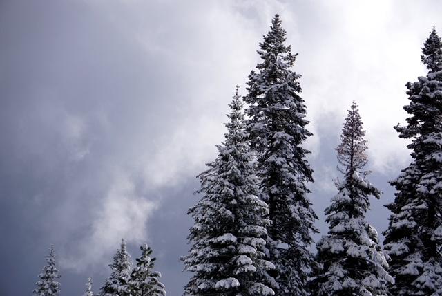 Hill and Dell Trail Mt. Shasta Nordic Ski Center