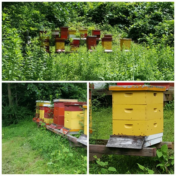 Red Bee Apiary 2