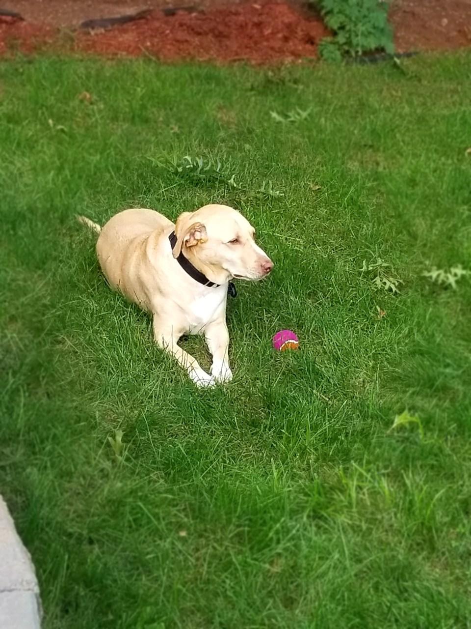 Harley in the back yard