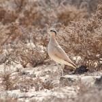 Corredor sahariano