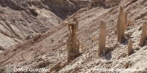 FOSILES VEGETALES - FUERTEVENTURA -