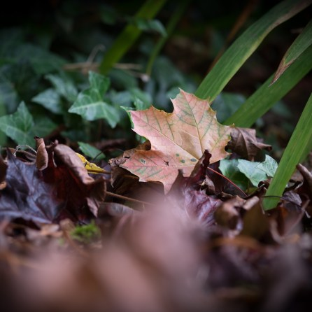 Leaf litter - the X-T1's angled LCD came in handy here. 1/280sec at f/2.4, ISO 200