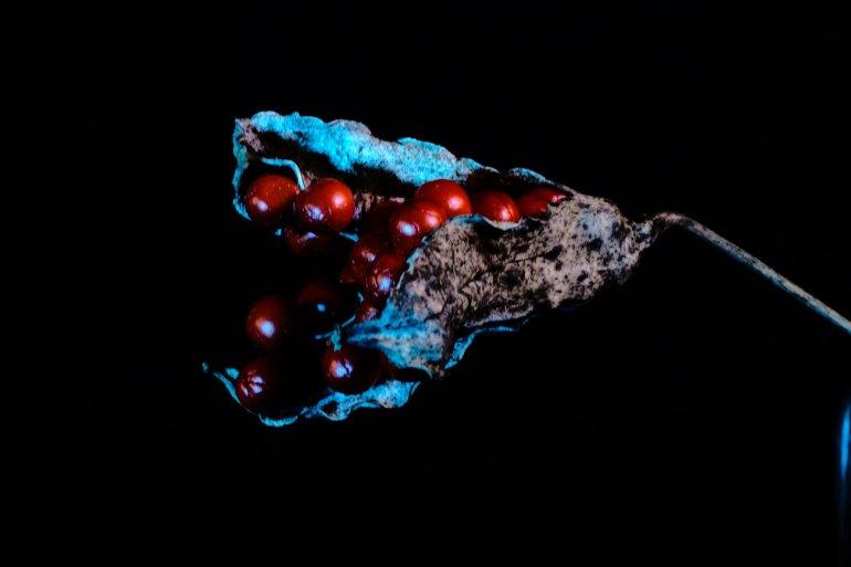 ©Rachel+Megawhat_Calla+Lily_Flowers+series_2017_ed.of+5_chromaluxe+on+aluminium_42x59.4cm
