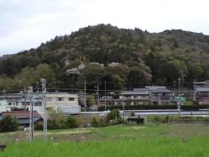関山神社にも桜が! 2015-04-06