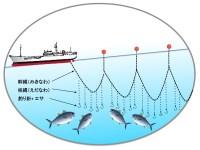延縄(はえなわ)漁のイメージ