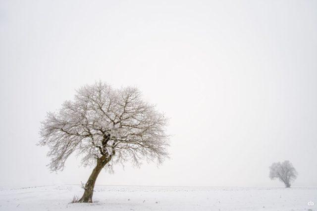 Bäume im Schnee | Fujifilm | X-T1 | 12mm