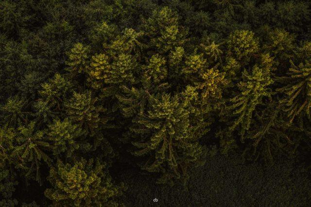 Baumspitzenbild - Landschaft | Fujifilm | X-T1 | 50-140mm