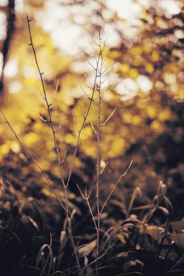 Goldene Zeiten am Wegesrand | Fujifilm | X-T1 | 35mm