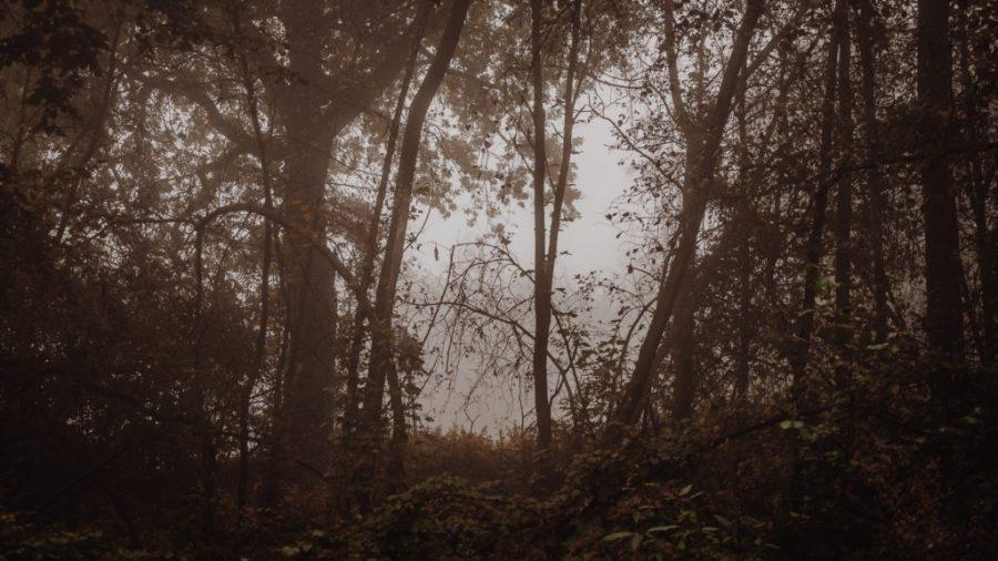 Im Dickicht | Fujifilm | X-T1 | 50-140mm