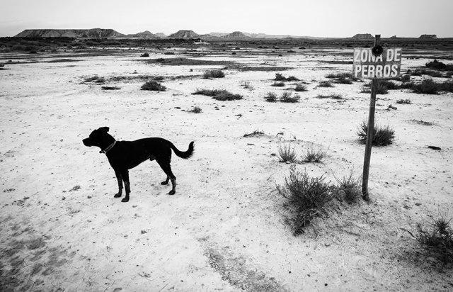"""""""Zona de perros"""" por Hodei Torres, con Fuji X-Pro1"""