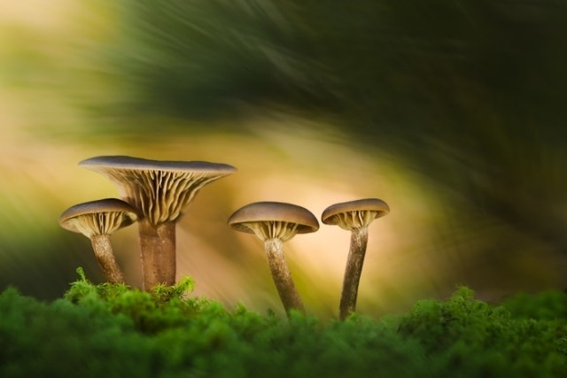 """Un trocito de bosque"" por Fran Cegarra, con Fuji X-Pro2."