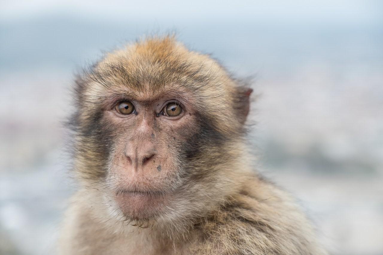"""""""Macacos"""" por Ricardo Figueirido. X-T2 + XF 16-55mm F2.8."""