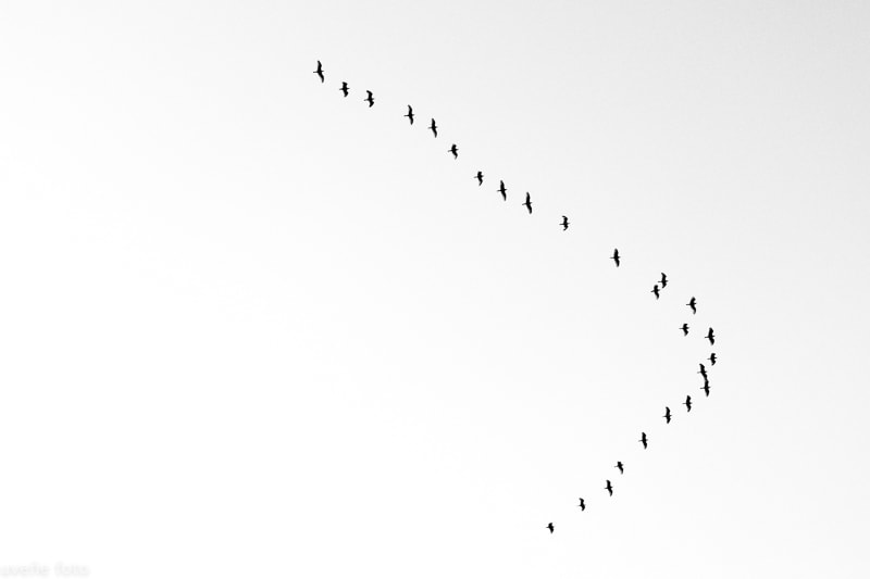 """""""Migración"""" por Virgilio Hernando. Fuji X-Pro2 + XF 18-55mm."""