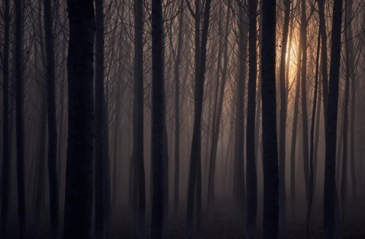 """""""Gigantes en la niebla"""" por Ginés Castellanos.  Fujifilm X-T3."""