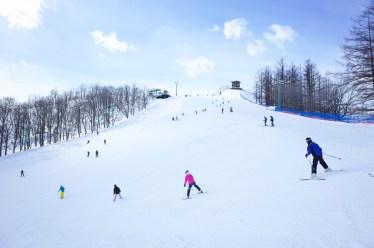 スキーのターンの種類と特徴。滑り方のコツや練習方法も紹介