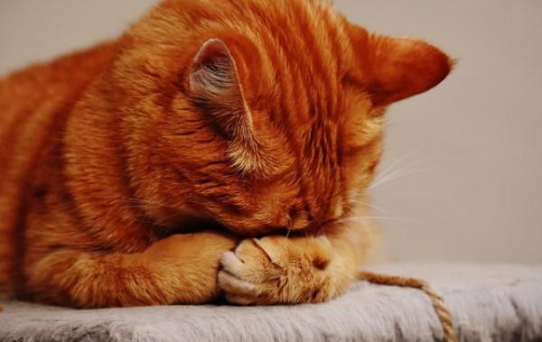 目を隠すネコ