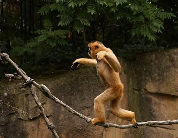 バランス猿