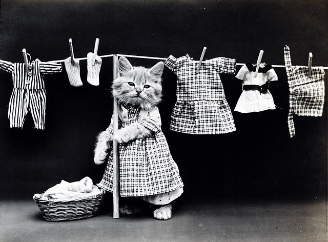 洗濯してる猫