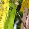 七夕に祭りを東京で楽しむなら浅草の下町七夕まつり!アクセスは?