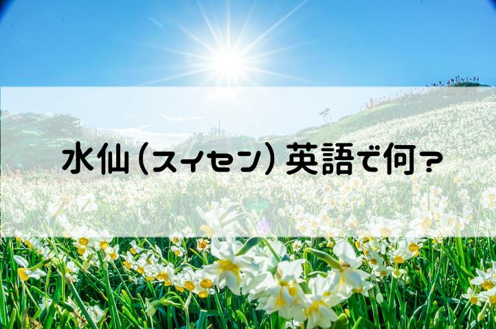 水仙(スイセン)・球根って英語で何?【読み方・音声つき発音解説】