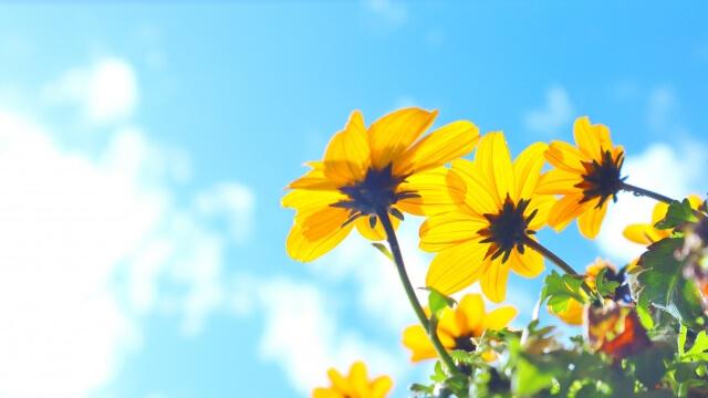 福岡の心理カウンセリング専門機関「福岡臨床心理オフィス」の臨床心理士によるブログです。