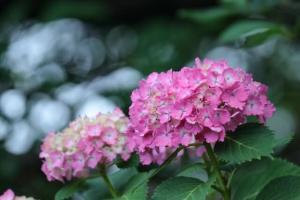 福岡で心理カウンセリングを行っている「福岡臨床心理オフィス」の女性カウンセラーが綴るブログです