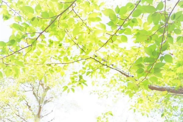 博多駅近くにある心理カウンセリング機関「福岡臨床心理オフィス」の女性カウンセラー・臨床心理士によるブログです